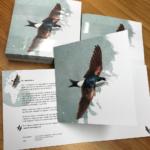 huiszwaluwkaarten | grafisch ontwerp | zwaluwkring Huizen & Blaricum | Delichon urbicum | Huiszwaluw | aquarel