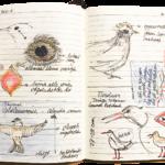 stenovogels | vogelherkenningscursus